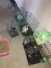 卖三个自己家养的大兔子十几斤一个,价钱可谈