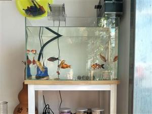 60*35*40鱼缸,带钢木结构底座,滴流上滤,专业灯光,底吸水泵。可单售鱼缸。