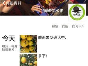 市果业局明确规定11月1号赣南脐橙采摘,不法商贩提前偷采,破坏品牌形象