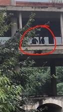 爆料:建国大道河边烂尾廊桥有流浪小孩,掉下去必死无疑 !