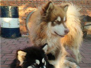 两只爱犬丢失,如有线索,求好心人联系我