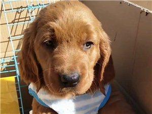萬能的朋友圈哪有賣寵物狗的