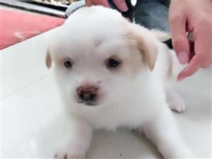 自家養的小狗,尋找有愛心的愛狗人士
