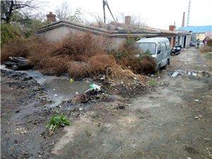 白城市九三路五委居民的生活环境糟透了