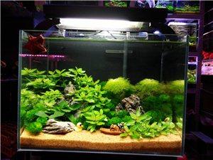 生态造景鱼缸,给生活增添点乐趣!