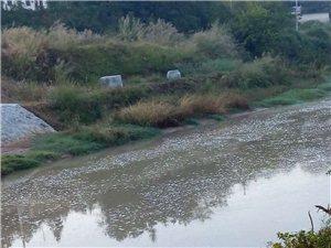 早上的东江河,河水浑浊,河面上一层白泡泡,空气中还有一股刺鼻的味道。这样对人体会不会有害?
