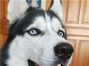 大家帮忙遇到的电话联系狗狗主人,很着急
