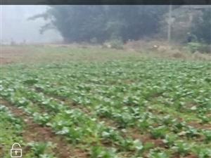 农田投毒牲畜没人管