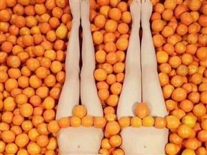 赣南脐橙果园直邮