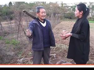 罗田平湖惊现红薯王