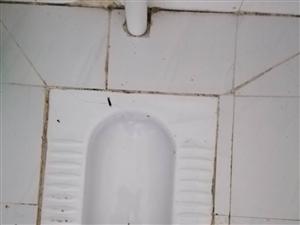 公厕卫生管理问题多