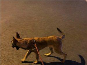 寻爱犬旺旺