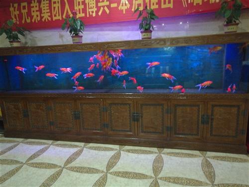 鱼缸?? 长4米宽60高160