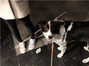 上班沒時間照顧狗狗  希望有愛狗人士領養