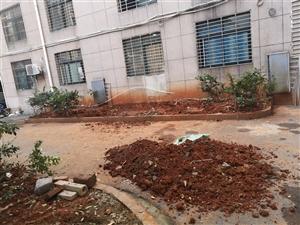 澜庭国际小区绿化带屡次被挖