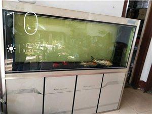 美亚特鱼缸,一米八,高80,宽45使用中,带鱼,地虑