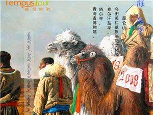青海冬季駱駝文化節