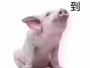 自家养的二年猪 大家想吃放心的猪肉请联系我  绝对纯粮食喂养 无饲料!数量有限 先到先得!