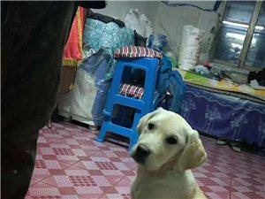 家里狗太多了
