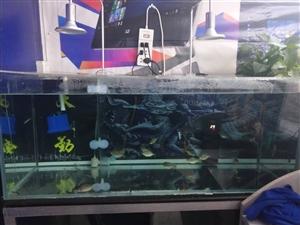 1米背濾魚缸