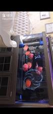 鱼缸出售,1.8米,740宽,5月份入手,使用7个月,玩够了,上岸,有这些联系