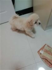 昨天在三中附近捡到一只小狗,小狗很爱洗澡!