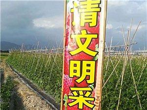 福建有機牛奶草莓采摘園