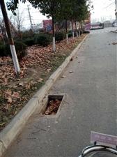 东开发区行政路一条马路井盖没剩几个。