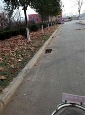 东开发区一条马路井盖没剩几个,个别人的素质真差。