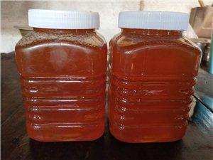 出售正宗野生蜂蜜