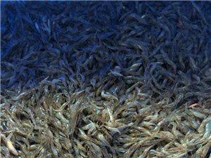 长期供应水库野生小杂鱼.虾