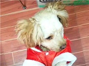 寻狗启示!!!