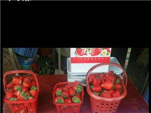 小盧草莓園