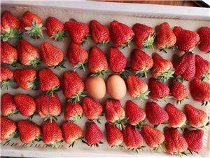 丹东东港九九草莓省内90一箱三斤包邮