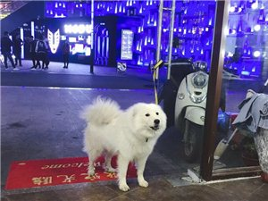 寻狗启示,拜托大家帮忙转发留意,酬金3000元。