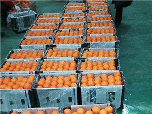 巫山纽荷尔脐橙