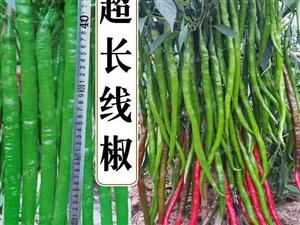 农产品高产品种