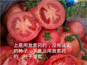黃瓜西紅柿采摘園