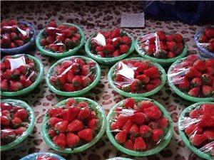 南蔡奶油草莓