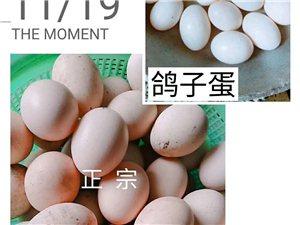 出售土鸡,土鸡蛋