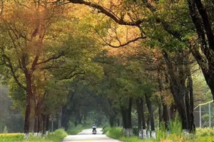 在这里想问一下,汶龙公路两边的树弄那额去了?