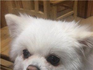 紧急寻狗狗:昨晚5点阳光水岸走失,8点出现在五星华府小区内