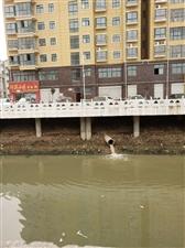 污水又往河里排了