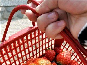 山�蛱�r草莓