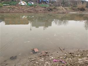 薛家沟河里污染严重