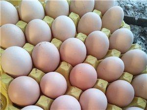 雞場送雞蛋