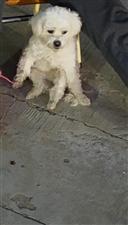 昨天中午时分家里的狗丢了