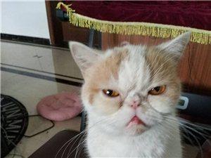 猫妮找男朋友了