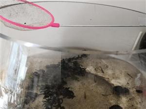 鱼缸一个,直径大约有25厘米,高度大约17厘米。20元。一五扒四三六八,零一八二