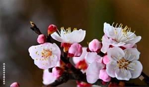 《今春再游杏花谷》